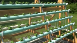 Homemade_vertical_(A-Frame)_hydroponic_system2