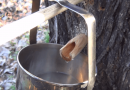 [Video] Collect Sap With DIY Fir Spiles To Produce Maple Syrup.