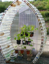 bottle-greenhouse-2